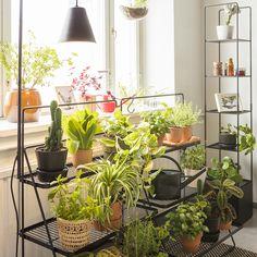 Viherhyllykkö - Kekkilä Gerbera, Plants, Plant, Planets