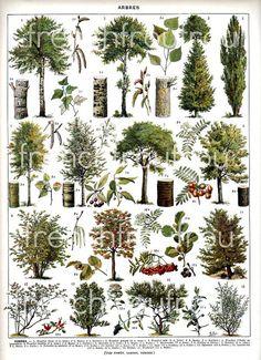 am hoping to score a vintage botanical poster Illustration Française, Illustration Botanique, Illustrations, Vintage Botanical Prints, Botanical Drawings, Botanical Art, Vintage Art, Impressions Botaniques, French Colors