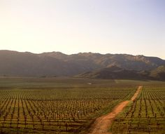 Valle de Guadalupe: Recorre la ruta del vino mexicano en Baja California