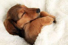 寝取られた・・・わん!ダフル、ドリーミングベッドな犬たちの画像