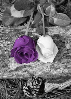 Black White Purple Rose Flower Art. Love the black/white the way the color in the roses shows up...