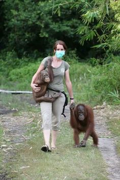 Woman working with Orangutans