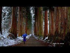 小雪舞う初冬の戸隠奥社神社