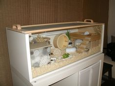 This is Like the hamster cage my mom is currently making for me! I have a fully grown hamster but the cage is decent, it has tubes to go to the top part of the cage but this is cooler Hamster Tank, Hamster Life, Hamster Habitat, Hamster House, Hamster Stuff, Dwarf Hamster Cages, Cool Hamster Cages, Gerbil Cages, Robo Dwarf Hamsters