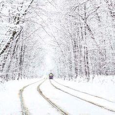 Белоснежный тоннель в парке Сокольники. Просто волшебно!  #moskadr #сокольники #зима #зимавмоскве #мск #москва #москвасити #снежок