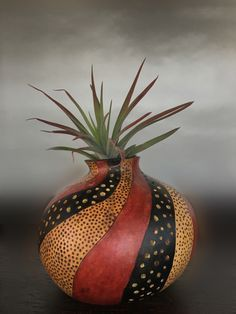 photos of gourd planters used for air plants