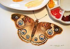 Butterfly - watercolor illustration - original