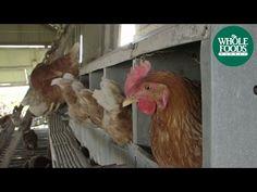Small Farms, Big Impact - http://modernfarmer.com/?p=41719&utm_source=PN&utm_medium=Pinterest&utm_campaign=SNAP%2Bfrom%2BModern+Farmer