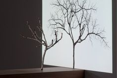 Samuel Rousseau, L'ARBRE ET SON OMBRE, 2008