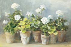 White Geraniums Posters by Danhui Nai - AllPosters.co.uk