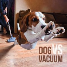 Best Vacuum Cleaners For Dog Hair