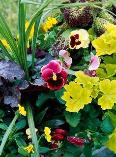 Mix spiky Dracaena with puckery coleus (Solenostemon scutellarioides), coralbells (Heuchera spp.), flouncy pansy blossoms (Viola spp.) and geranium leaves (Pelargonium spp.) to create a lush, springtime combination.