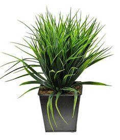 decoraconmaría: PLANTAS DE INTERIOR Y OTRAS Plants, Furniture Restoration, Indoor Plants, Interior Design, Plant, Planets