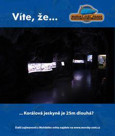 Víte, že... #morskysvet #morskysvetpraha #seaworld #seaworldprague #praha #prague #touristprague #zoo #viteze #ryby #zraloci #koraly #hledasenemo Praha, Sea World, Desktop Screenshot