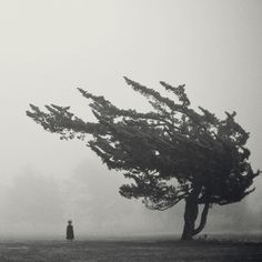 love this windblown tree..the little girl on the other hand, although likely very cute, is just creepy in this setting