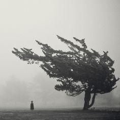 petite fille grand arbre