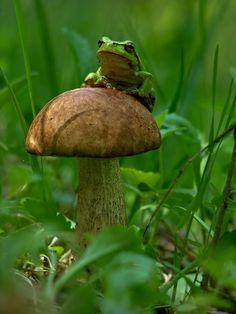25 photographies en pleine nature qui dévoilent l'harmonie entre les champignons…