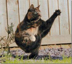 Kangfoo cat4