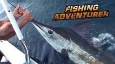 GoBajaCA   The Fishing Adventurer goes after stripped marlin in Baja   Video: 19:56
