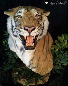 Tigre artificial Faux Taxidermy, Fauna, Mammals, Lion, Animales, Leo, Lions