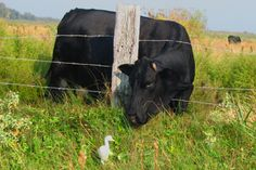 . Country Barns, Country Life, Country Living, Country Bumpkin, Texas Photography, Country Landscaping, Perfect Timing, Farm Life, Cattle