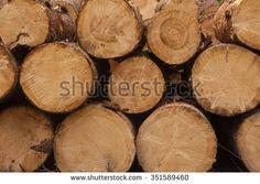 Tree Cross Section - Pattern / Background  - stock photo