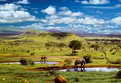"Puzzle EDUCA ""Parque nacional Tsavo, Kenia"", 500 piezas."