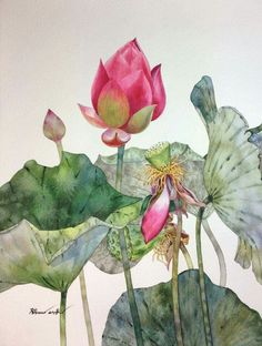 Lotus Painting, Watercolour Painting, Watercolor Flowers, Watercolors, Botanical Art, Botanical Illustration, Korean Painting, Guache, Chinese Art