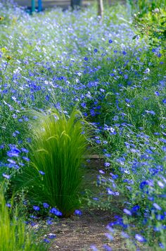 Plants are one of the main forms of life. Most of the energy of green plants is obtained from sunlight. Beautiful Landscapes, Beautiful Gardens, Beautiful Flowers, Blue Garden, Colorful Garden, Landscape Design, Garden Design, Drought Tolerant Garden, Small Courtyard Gardens