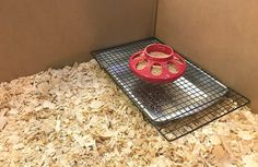 Before you bring your adorable baby ducklings home be sure to have a brooder all set and ready for them. A simple DIY brooder you can make with supplies that are extremely inexpensive or even on hand! Raising Backyard Chickens, Backyard Chicken Coops, Baby Chickens, Diy Chicken Coop, Chicken Ideas, Building A Chicken Run, Brooder Box, Backyard Ducks, Raising Ducks