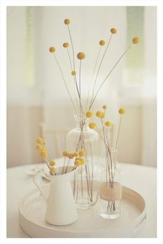 billy buttons/craspedia/billy balls/woollyheads in white pitchers