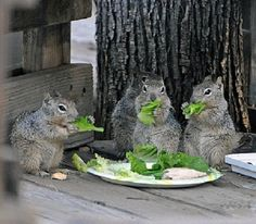 Super Reasons to Appreciate Squirrels! Squirrels know how to eat healthy.