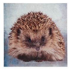 Wilko Hedgehog Canvas