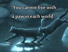 """""""Je kunt niet met 1 poot in beide werelden leven"""" Blz 34. Hiermee bedoelt Leeuwenhart  dat Rufus, de kat waar het over gaat, niet als een huiskat én een clankat kan leven."""