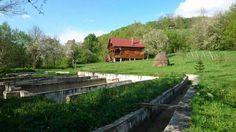 Vand Casa de vacanta + bazine piscicole Valea Inzelului - imagine 2