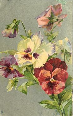 stems lower right, three open pansies, three partially open above and right
