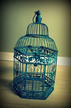Green finch and linnet bird...