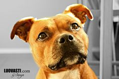 Luovasti.com by Sanya: Kuvankäsittelyä ja potretteja koirasta