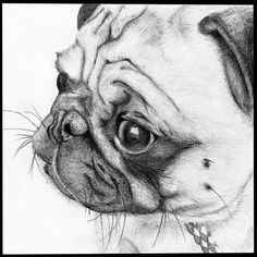 How #pawsome is this #pug sketch?! ・・・ www.jointhepugs.com/ ・・・ #pug #pugpower #pugsnotdrugs #puglife #puglove #mops #cuteness #puglover #dogs