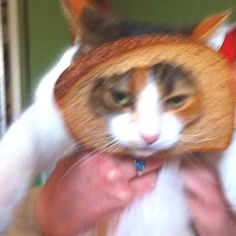 inbred cat! lol