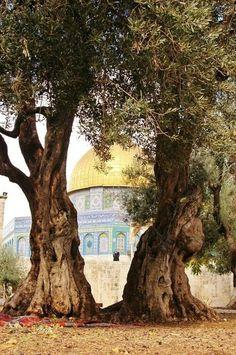 القدس ❤️