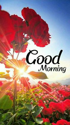 #goodmorning Good Morning Beautiful Pictures, Latest Good Morning Images, Good Morning Nature, Good Morning Images Flowers, Good Morning Roses, Good Morning Beautiful Quotes, Good Morning Gif, Morning Wish, Happy Good Morning Quotes