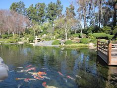 Earl Burns Miller Japanese Garden, Long Beach, CA Ponds, Goldfish, Long Beach, Water Features, Waterfalls, Koi, Burns, Bucket, Hiking