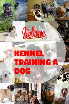 Kennel training is useful with youthful dogs and also older puppies with stress and anxiety issues. The greatest goal regarding crate exercising is trying to keep your dog away from harms approach. Kennel Training A Dog, Crate Training, Dog Training Tips, Stress And Anxiety, Stuff To Do, Have Fun, Exercise, Puppies, Feelings