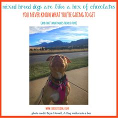 Mixed breed dogs are often overlooked in shelters. It's time to share the joys of adopting a mixed breed dog! Mixed Breeds Dogs | Adopt, Don't Shop | Animal Rescue | Animal Shelters |