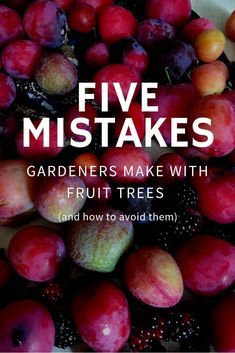 Five Mistakes Gardeners Make with Fruit Trees (and how to avoid them) - Gardening Know How's Blog