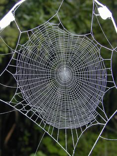 pictures of spiders and webs of the world...