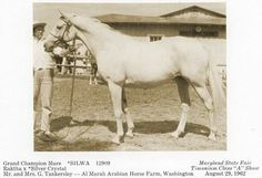 Silly 1950 gr. m. Rathka x Silver Crystal by Rangoon  Two lines to Skowronek