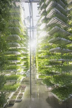 http://www.gardenwisdom.ca/ Check out the indoor farm in downtown Vancouver!