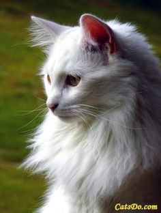 White Cat! I would name her pearl